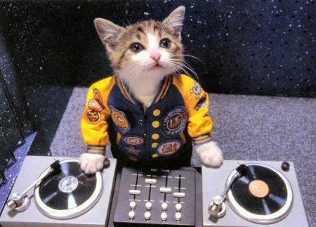 ネコ音楽.jpg