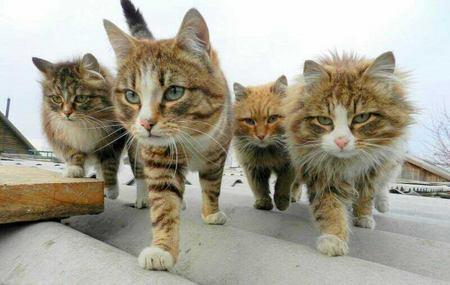 cat-sc-neko_01732.jpg