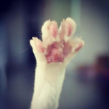 cat-sc-neko_01896.jpg
