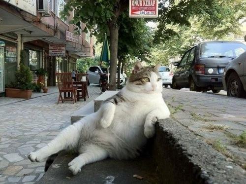 cat-sc-neko_01939.jpg