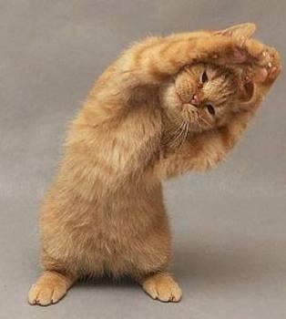 体操ネコ.jpg