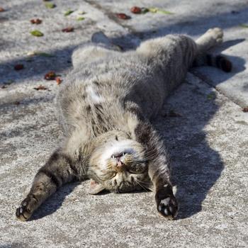 cat-sc-neko_01850.jpg
